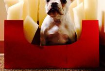 Pups / by Allison Jane