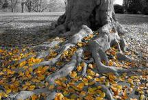 Trees / Beautiful shots of trees / by Jerry Ockfen