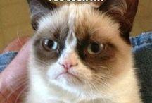 I Lerve Grumpy Cat / by Allison Jane