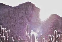 cactus queen / by allison  wheeler / wanderlings