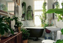 Bathrooms / by Alicia Vance Design
