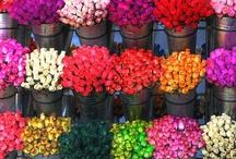 Colourful / Colours make my life beautiful! / by Iulia Marcu