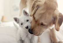 Dogs and Puppies / by JaNae Vanderhyde