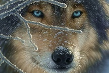Wild Life ~ Who's Afraid of the Big Bad Wolf? / by Kiera Cooke