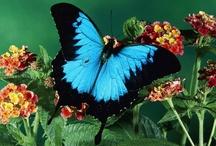 butterflies / by Carol Peng