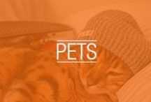NEFF PETS / From dogs to cats to chinchillas, we love to see your pets wearing Neff products. Upload a photo of your pet in Neff products using #petyourneff and you might see your photo here. / by Neff Headwear