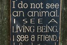 Animals / by Jim Davidson