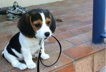ooh puppies / by Jenna Beam