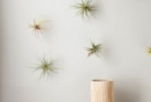 Creative and wonderful things for the Home / by Laura Calentine