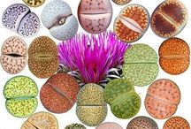 Gardening-Mostly Succulents / by Connie Scott