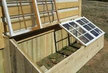 Renegade Farms / Ideas for my Renegade Farm in Colorado / by Cindy Karnitz