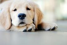 Puppy love :) / by Megan Melbye