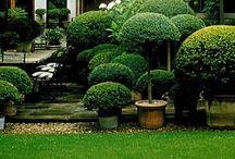 Dream gardens / by Roncea Mioara