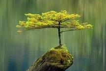 Trees / by Patty Dijigov
