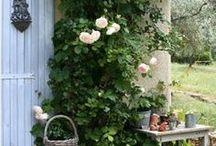 In the garden / by guglielmina s