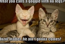 LOL cats/dogs / by June Manning