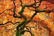 Extraordinary Trees / by Avant Gardens