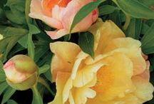 Fragrant Plants / by Avant Gardens