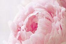 Botanicals / by Sharyn Sowell Studio