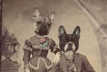 Our French Bulldogs  / Henri and Bijou / by Scott Smith