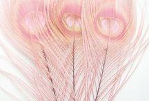 Pale Pink / by Ann Favot