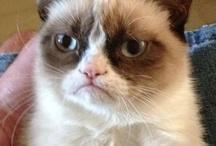 Grumpy Cat / by Steve Garufi