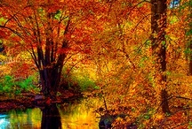 Autumn  / by Sandy ༺♥♥♥༻