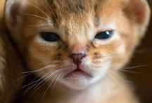 Meow. / by Alexandrea Berglund