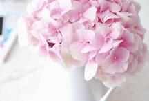Fleurs / by Kerryanne @ Shabby Art Boutique
