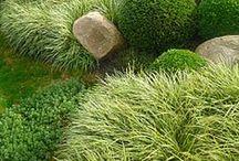Inspired Planting Design! / by Jodie Cook Landscape Design