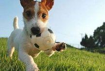 ❤ Jouets pour chiens ❤ / Sélection de tous les jouets pour chiens que j'ai pu trouver sur le net.  / by Nathalie DAOUT - Social Media
