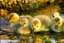 Just Ducky / by Lorraine Neaves