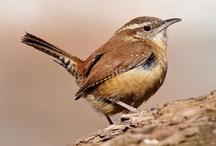 Birds / by Laura Bedinger