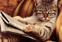 ~Cats~ / by Tasha Rollins Arrington