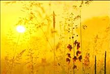 Summer / Sweet, sweet summertime.... / by Kristin W
