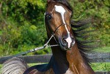 Horses, horses, horses! / by Lori Krueger