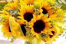 Sunflowers and fall wedding ideas / by Vicki Bateman
