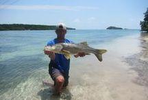 Florida Keys  / Fishing the Keys / by Angling Laboratory