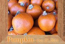 Gluten-Free Pumpkin Recipes / by Heather