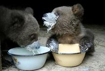 Bear File / by Sarah Landerman Collins