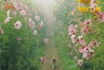 Dreaming of a Secret Garden / by Amy Farrier