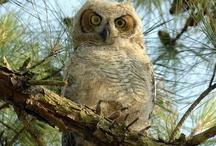 I love owls / by Teresa Vargo