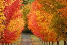 Autumn / by Shelia Little ~ Sweet Southern Blue