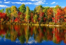 FALL'S BEAUTIFUL COLORS / by Wilma Bailey