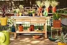 Green Thumb, Garden & Yard / by Christina Hanamaikai