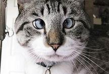 Cat Eyes / by Diane Freyer Hockstad