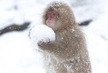 Animalia / by Shikin Hambali