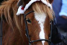Christmas / by Amanda Tout Mon Amour