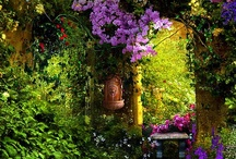 Garden / by Janet Richardson