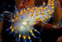 My NUDI obsession.... / by Donna Sullivan